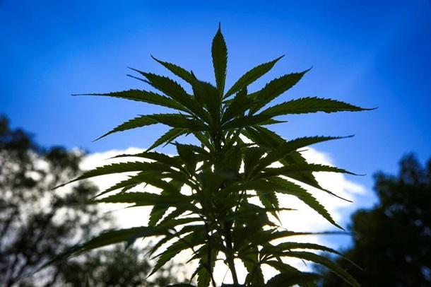 Праздник 4.20. Неофициальный День марихуаны 1